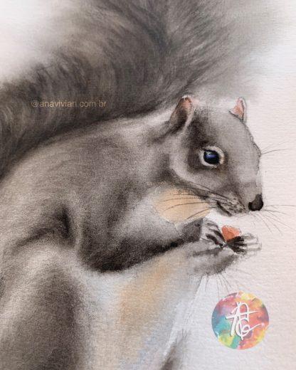 Esquilo Cinzento